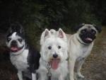 Pension canine familiale 06