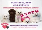 Toilettage wouaf wouaf à domicile Loiret 45 (Montargis..) 2