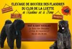 Bébés Bouviers des Flandres DU CLOS DE LA LUETTE 3