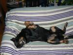 GARDE ANIMAUX EN FAMILLE / DOG SITTER 2