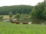Gite Cantal à la ferme 3*** avec pêche. 3