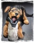 Gaëlle, éducatrice canin et comportementaliste pour animaux