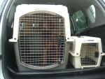 Taxi animalier 2