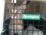 Transport animalier 2