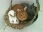 Garde lapins nains et petits rongeurs