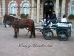 Attelages / chevaux pour vos mariages 3