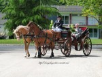 Attelages / chevaux pour vos mariages 1